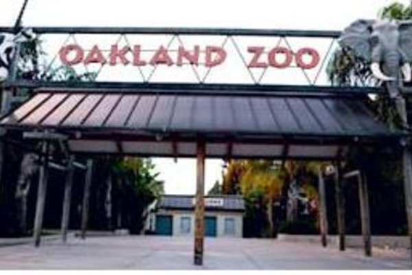 oakland zoos newest addition - 600×400