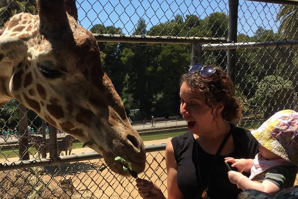 World giraffe day feeding preview
